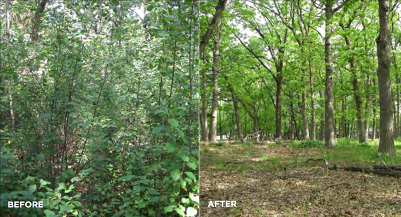 Invasive_Woody_Species_Before_and_After