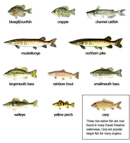 Fishing find an activity lake county forest preserves for Types of fish that live in ponds