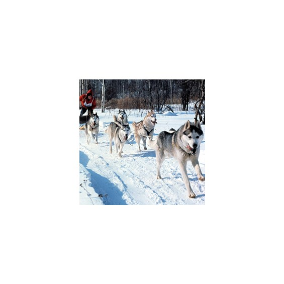 dog-sled-permit