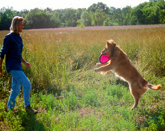Dog-with-frisbee-(c)-KK