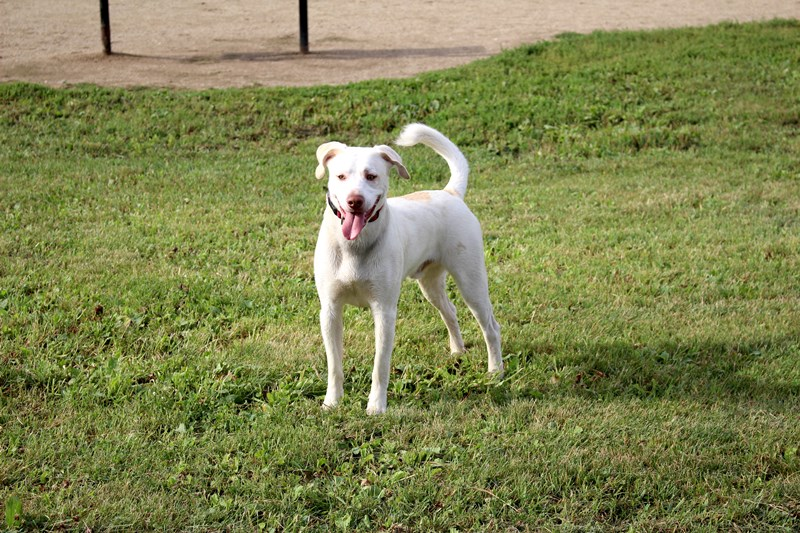 Dog Parks | Lake County Forest Preserves