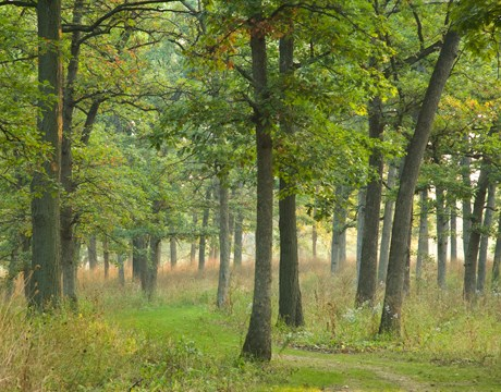 Lake County Illinois Forest Preserve Dog Parks