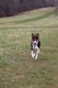Grassy_Lake_Lakewood_Dog_Exercise_Area_4.1.16_125