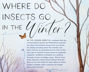 "Image of text on a page with title ""Where do insects go in the winter?"""