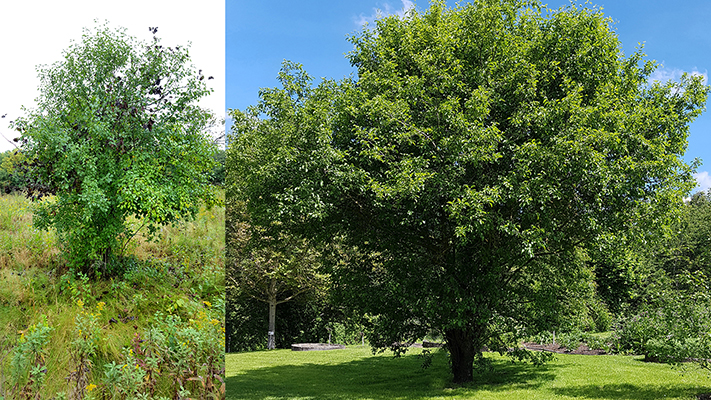 Shrub_and_Tree700x400