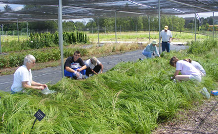 nursery_volunteers